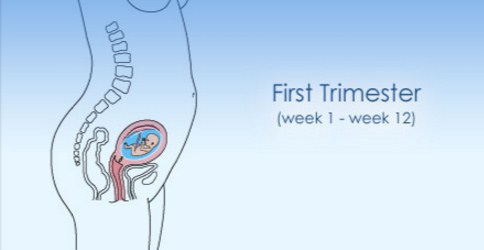 1ST Trimester Of Pregnancy